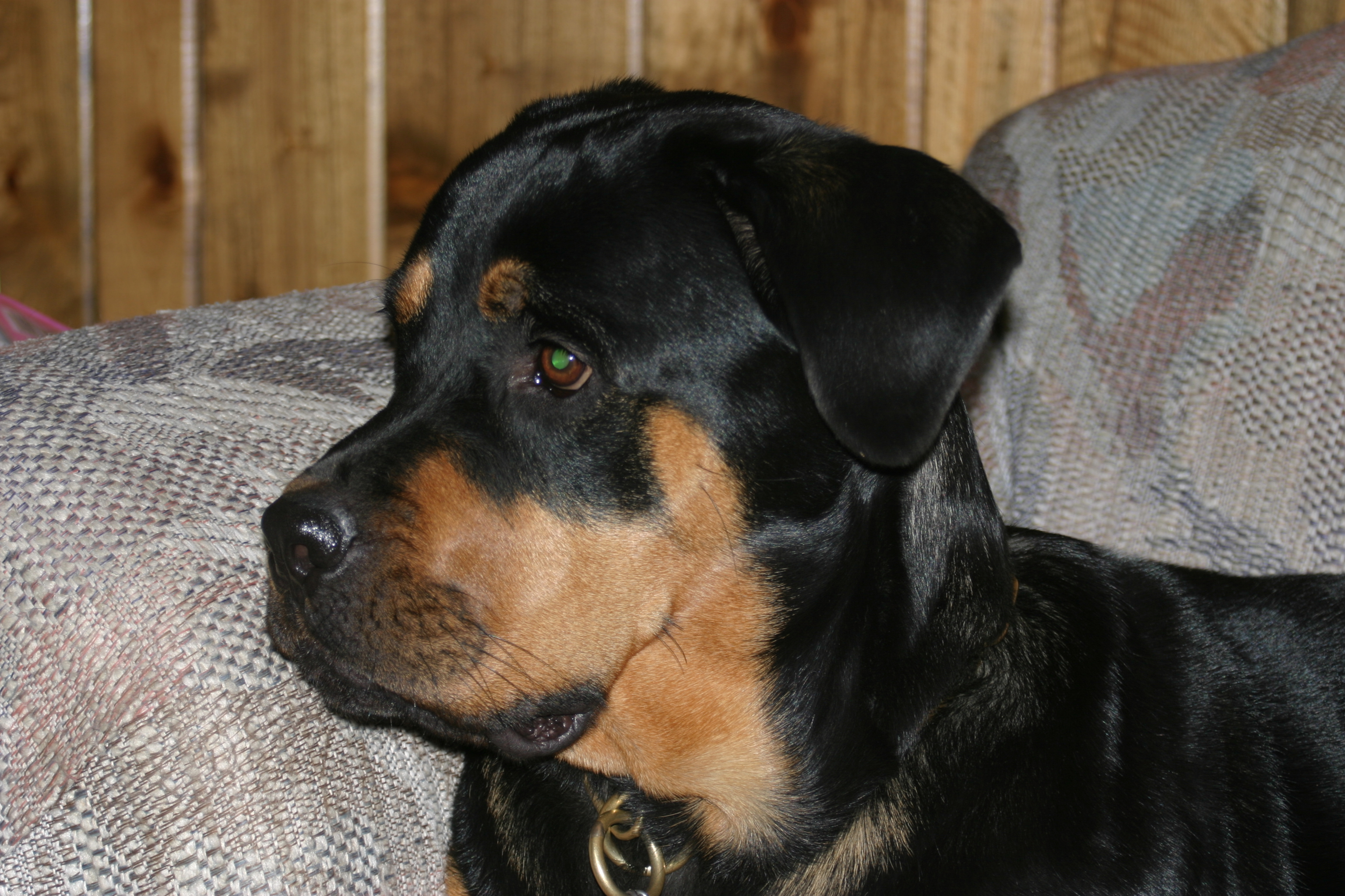 Roxy (June 2006)