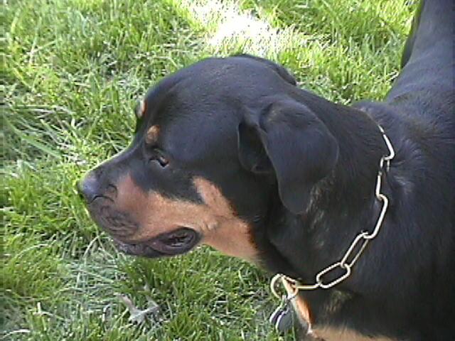 Roxy (May 2006)