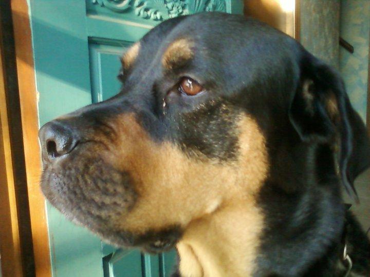 Roxy (May 2010)