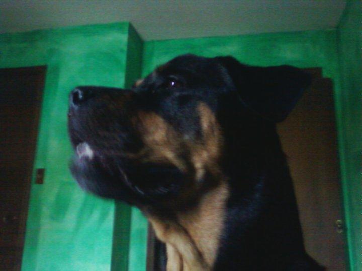 Roxy (May 2011)