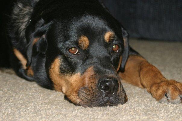 Roxy (circa 2008)